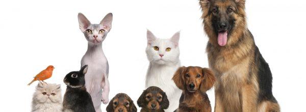 Sur quel site acheter la nourriture (croquettes, boites…) de son animal de compagnie au meilleur prix ?